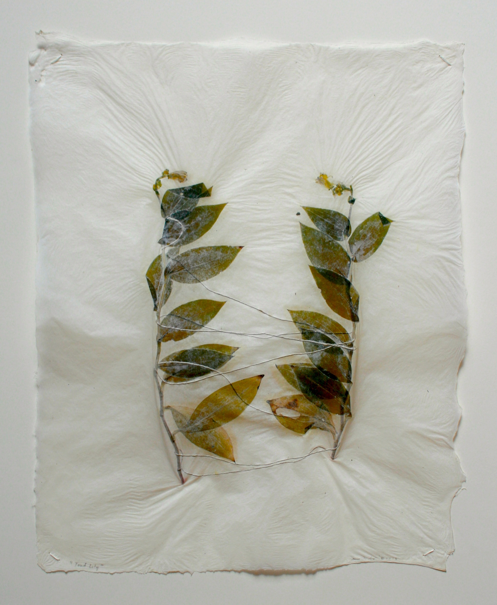 Ann Marie Kennedy - Toad Lily - Abaca paper with plants and string: 2013